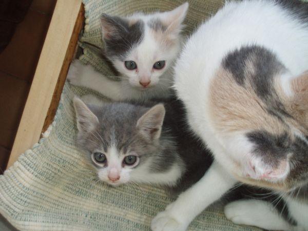 gattini.jpg(55.4 Kb)